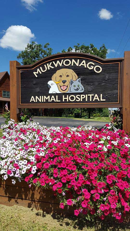 take a tour mukwonago animal hospital